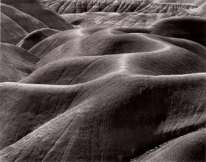 barnbaum painted desert