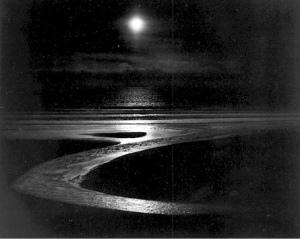 Wynn Bullock Dune