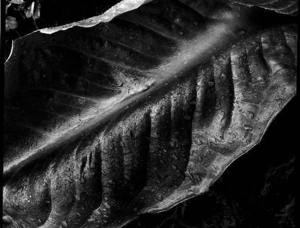 "How I ""saw"" the leaf"