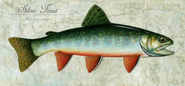 silver-trout