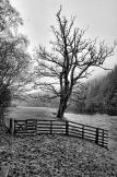 IMG_7714_5_6_easyHDR-black-and-white